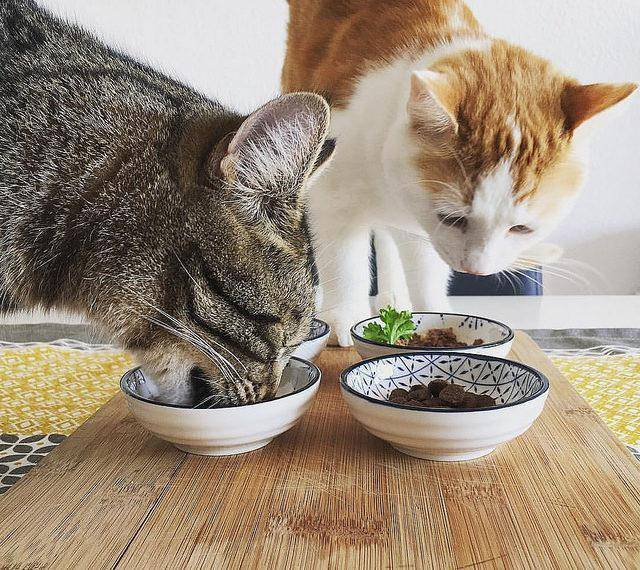 Чем лучше кормить котенка: натуралка, готовый сухой и влажный корм, какие продукты можно и нельзя, правила кормления, сколько раз в день