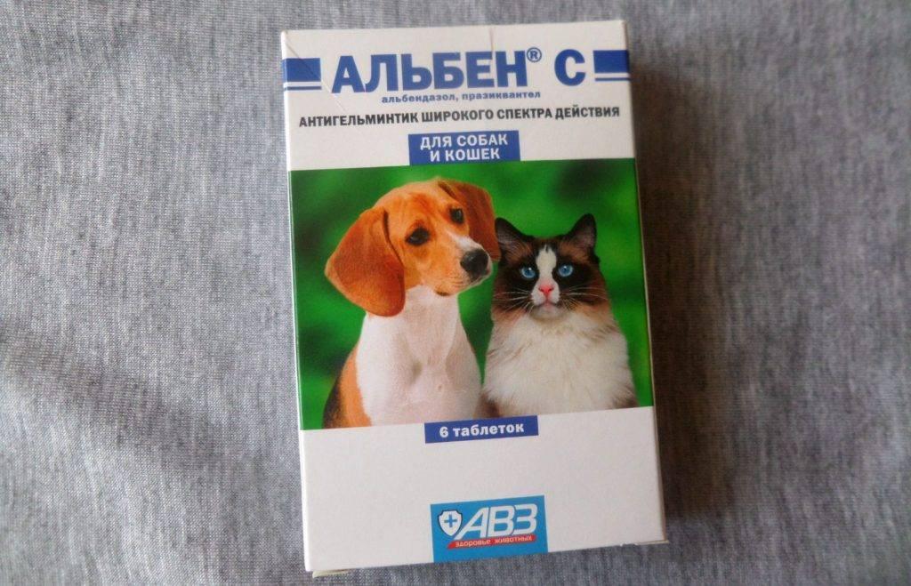 Как принимать альбен с для кошек?