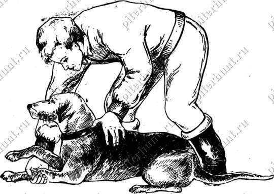 Обучение собаки вставанию и ходьбе на задних лапах. как научить собаку при этом ещё и ходить назад?