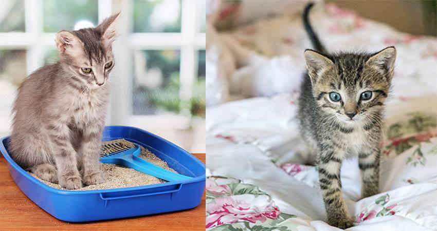 Почему кот не пьет воду вообще, что делать, как заставить животное лакать из миски?