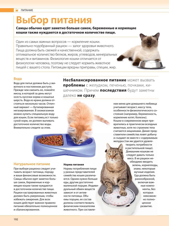 Чем кормить котенка от 1 месяца до 2-3 месяцев
