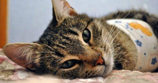 Интересные факты о кошках, которые ты не знал