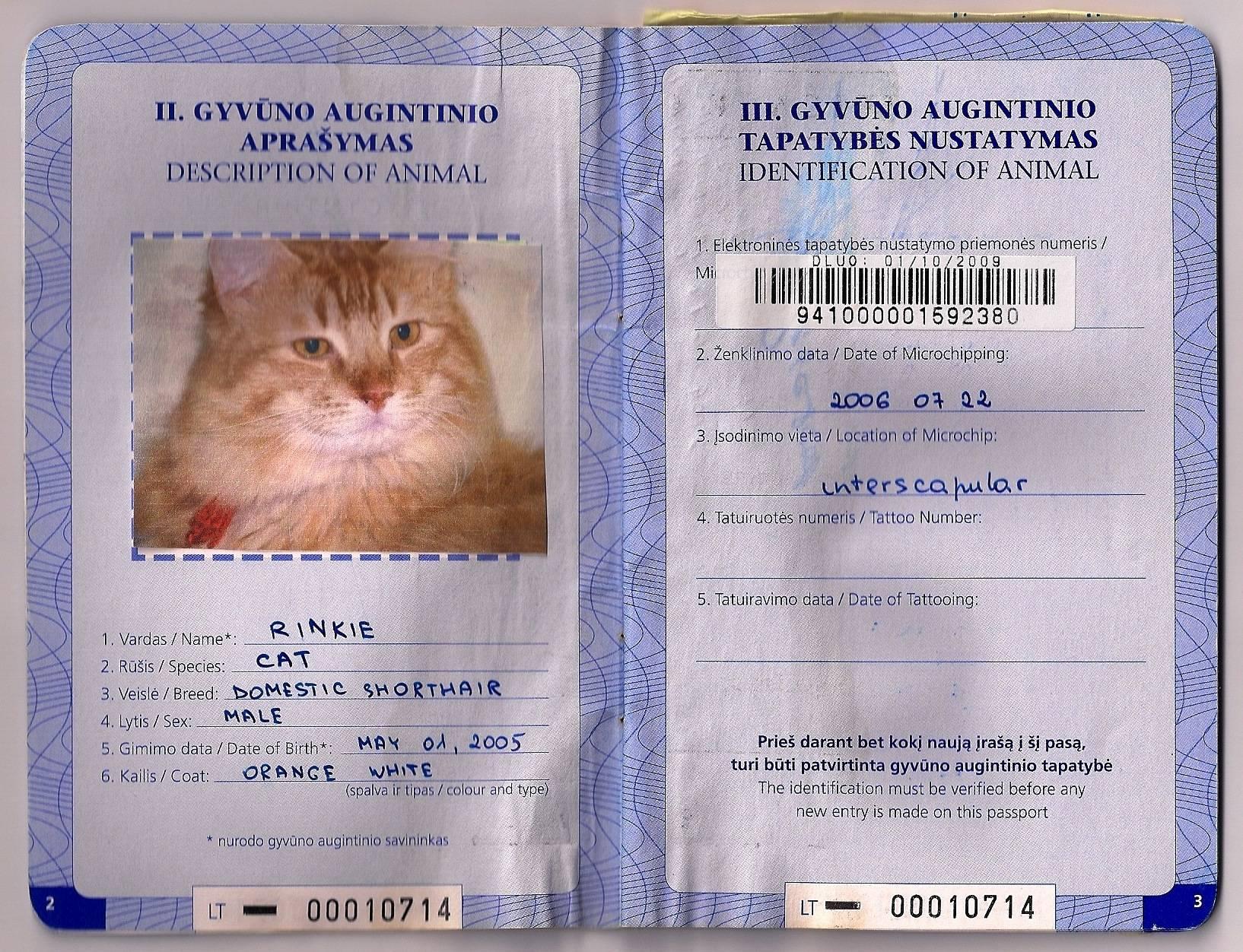 Ветеринарный паспорт для кошки: как сделать и сколько стоит кошачий паспорт, образец заполнения