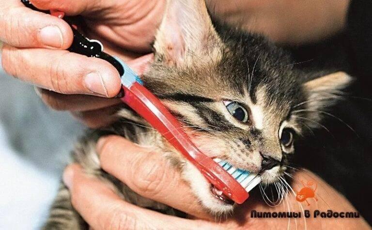 Почему у котенка пахнет изо рта 10 причин. автор ветеринар