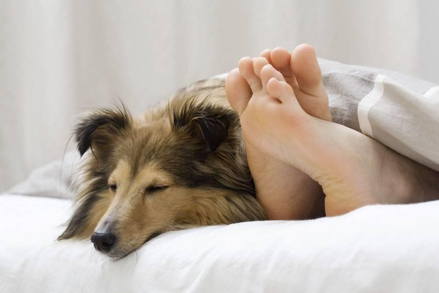 Почему собака ложится спать прямо на хозяина