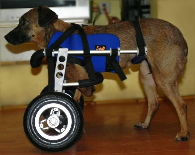 Коляски для собак: виды, особенности выбора и использования