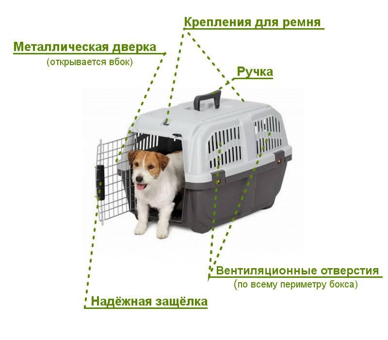 Обзор переносок для собак на время прогулок и путешествий
