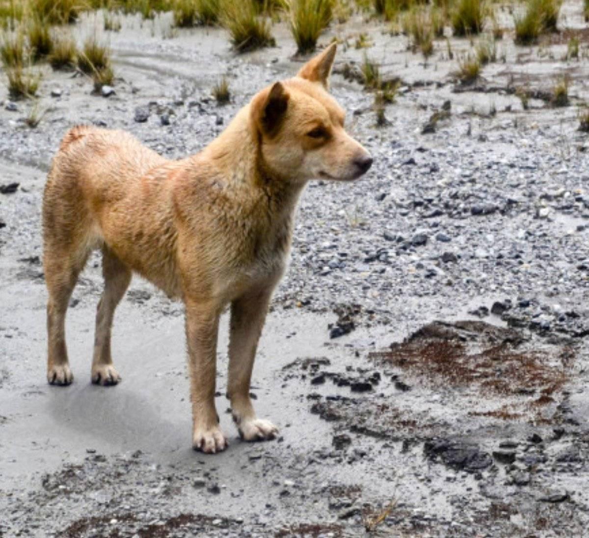 11 самых опасных пород собак - рейтинг 2021