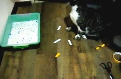 Как отучить кота гадить, метить где попало [10+ советов]
