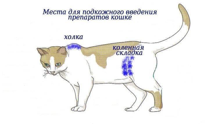 Холка у кошек: где находится и как выглядит, что это такое, как ее найти?