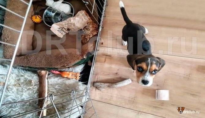 Обустройство вольера для собак: материалы, планировка, отделка