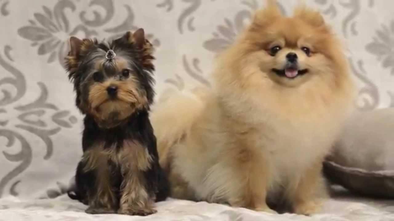 Памятка для владельцев кошек, собак и других питомцев в британии