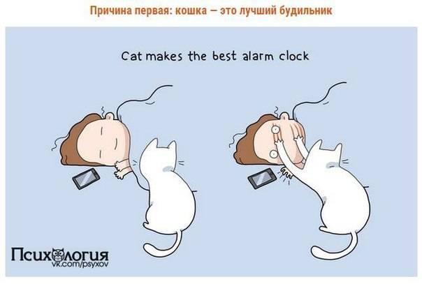 Почему стоит заводить кошку: 10 веских причин | | на всякий случай
