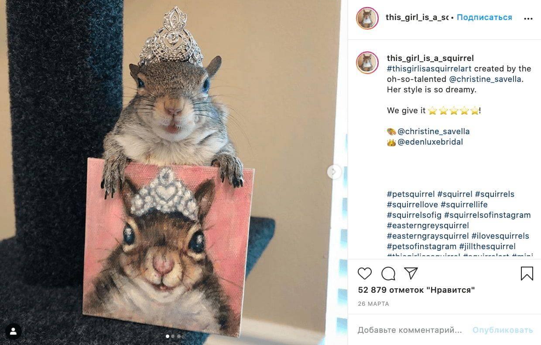 Самые известные питомцы в Instagram, за которыми интересно наблюдать