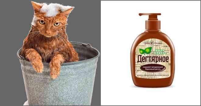 Как мыть собаку? нужно ли купать щенка в жару? когда в первый раз его мыть? можно ли использовать хозяйственное мыло? правила мытья