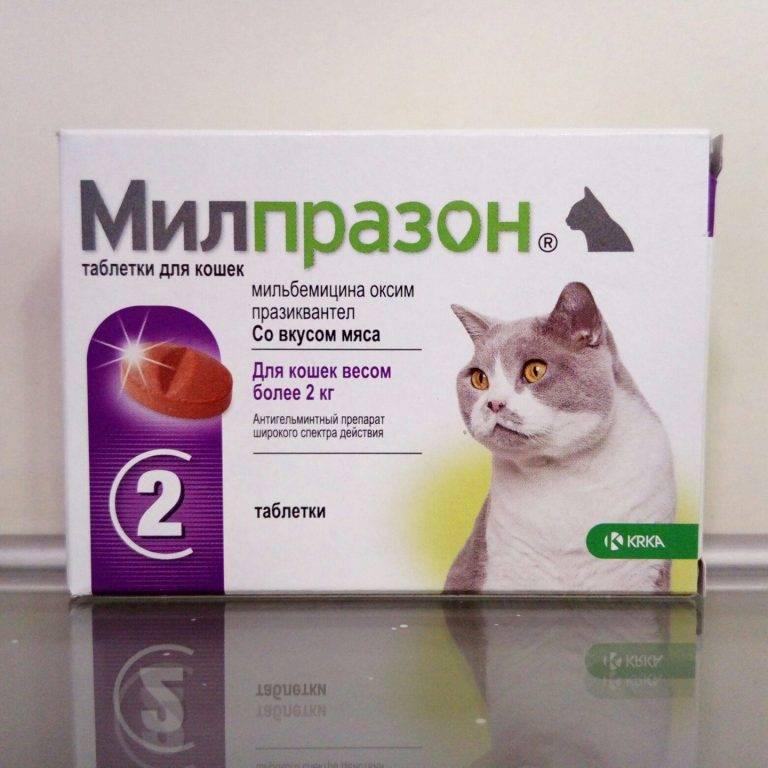 Милпразон для кошек: инструкция по применению, направленность действия, эффективность