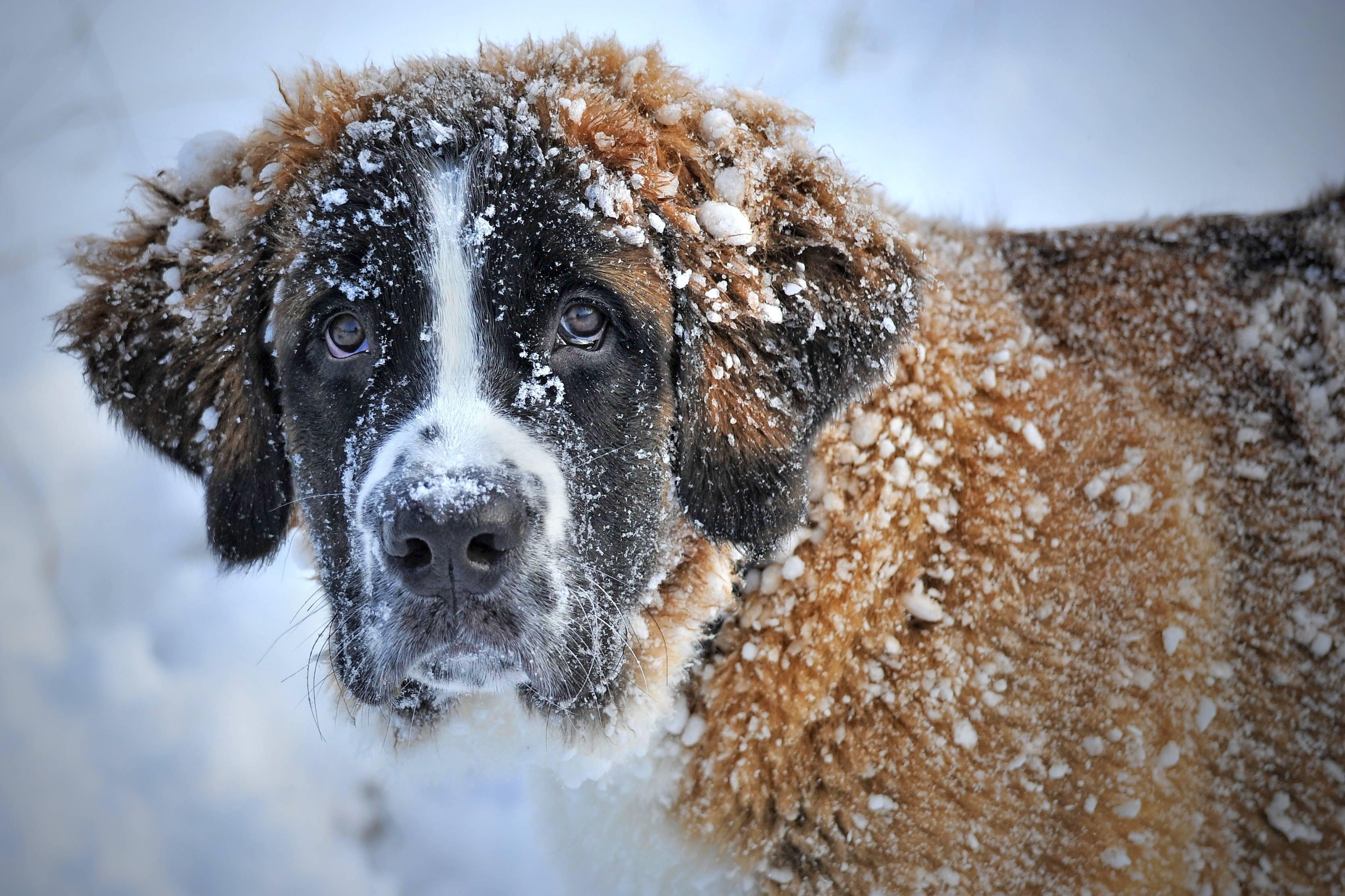 Лучшие породы собак в мире — топ-10 с фото, названием и описанием