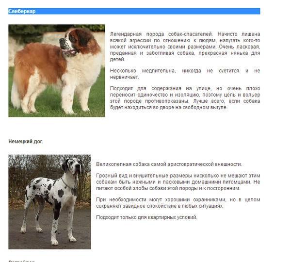 Узнаем породу щенка по внешнему виду: как определить что это за собака
