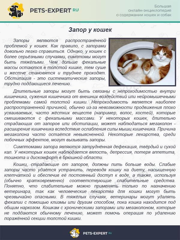 Заворот кишок у кошек: симптомы и лечение