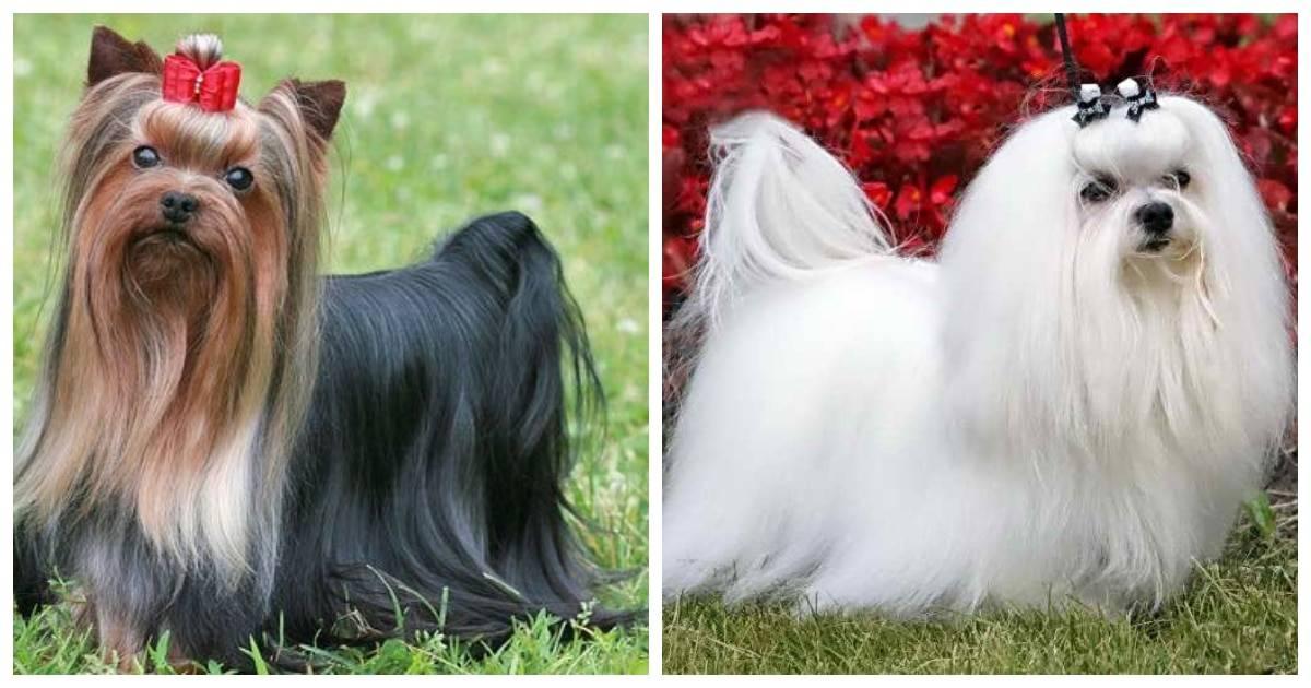 Лучшие породы собак для детей - для квартиры и частного дома с фото и описанием | petguru