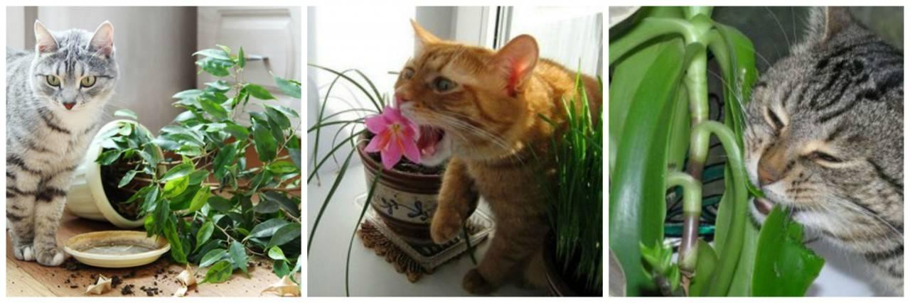 Как отучить кота есть цветы, первые действия при отравлении