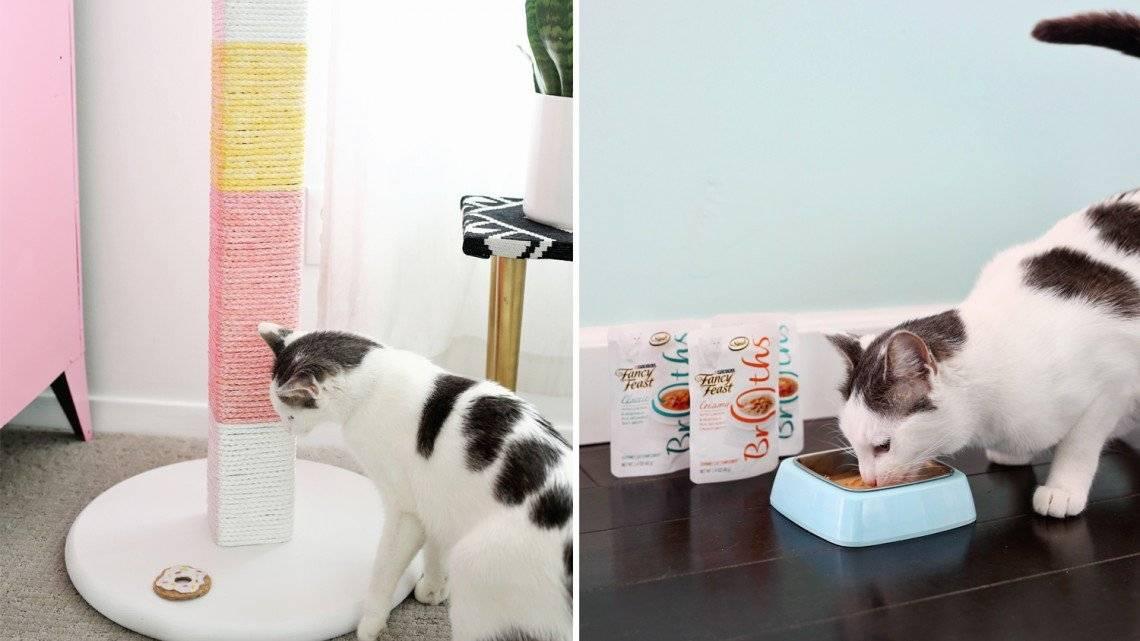 Лайфхаки для котов и кошек, которые упростят жизнь | видео