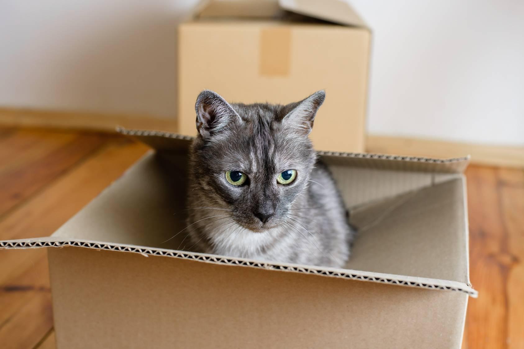 Взрослая кошка в новом доме – как помочь с адаптацией? приучение кошки к новому дому привыкание кошек к новым хозяевам