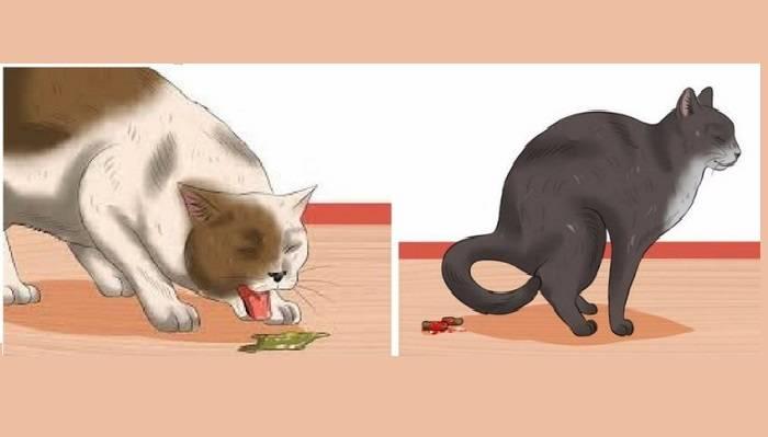 """Гастрит у кошек - причины, лечение заболеваний желудка у кошек в москве. ветеринарная клиника """"зоостатус"""