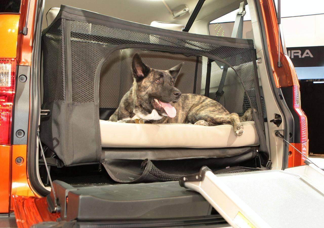 Как и в чем перевозить собаку в машине, подготовка к поездке и правила перевозки