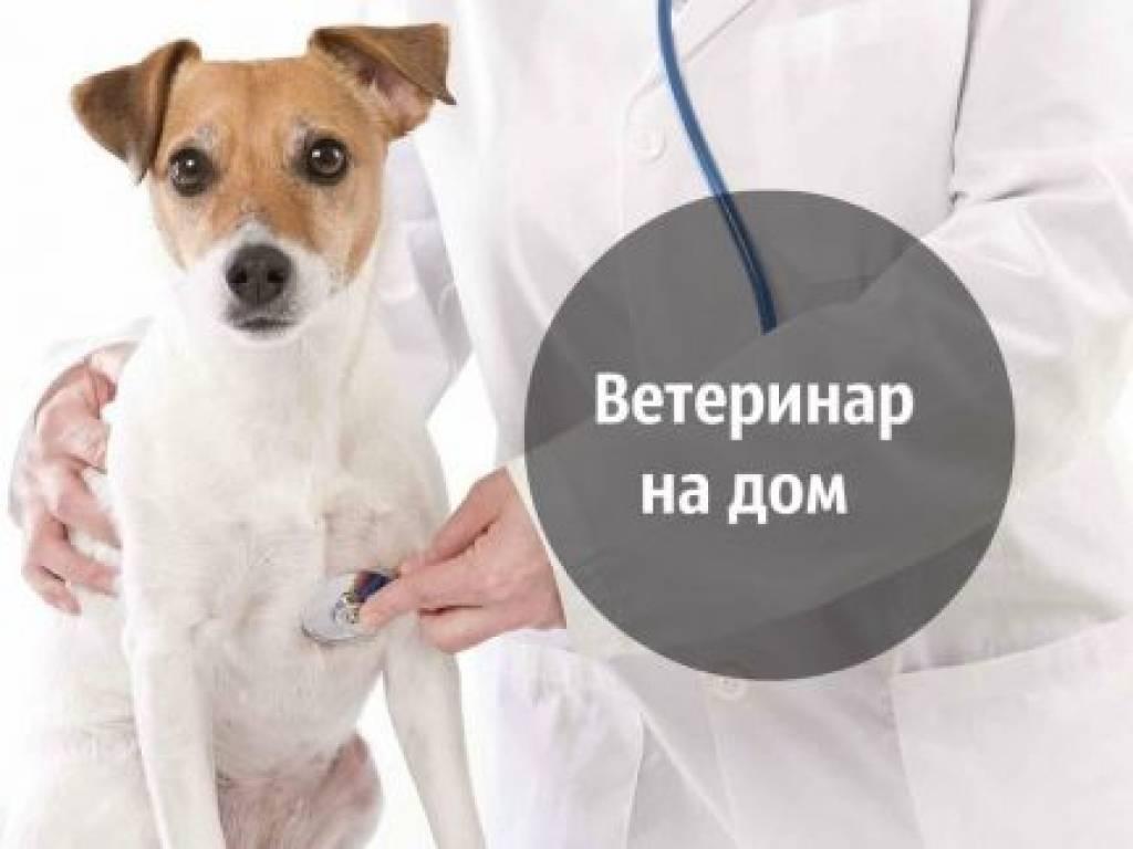 Как защитить кошку или собаку дома от блох и клещей
