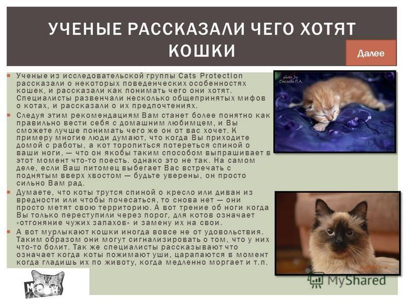 """Как помочь кошке родить, если она не справляется самостоятельно   блог ветклиники """"беланта"""""""