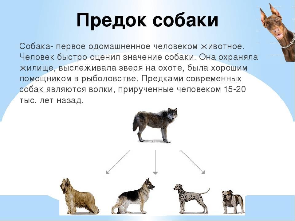 Когда появился первый человек на земле: кто создал людей, в каком периоде и как развивались люди | tvercult.ru