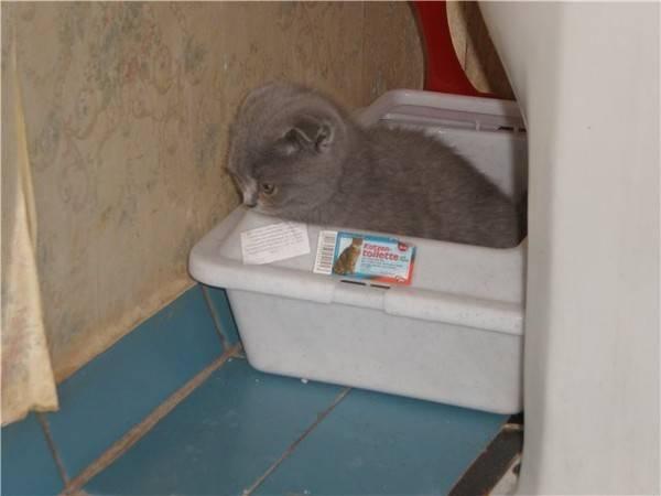 Кошка ходит в туалет мимо лотка - все причины почему