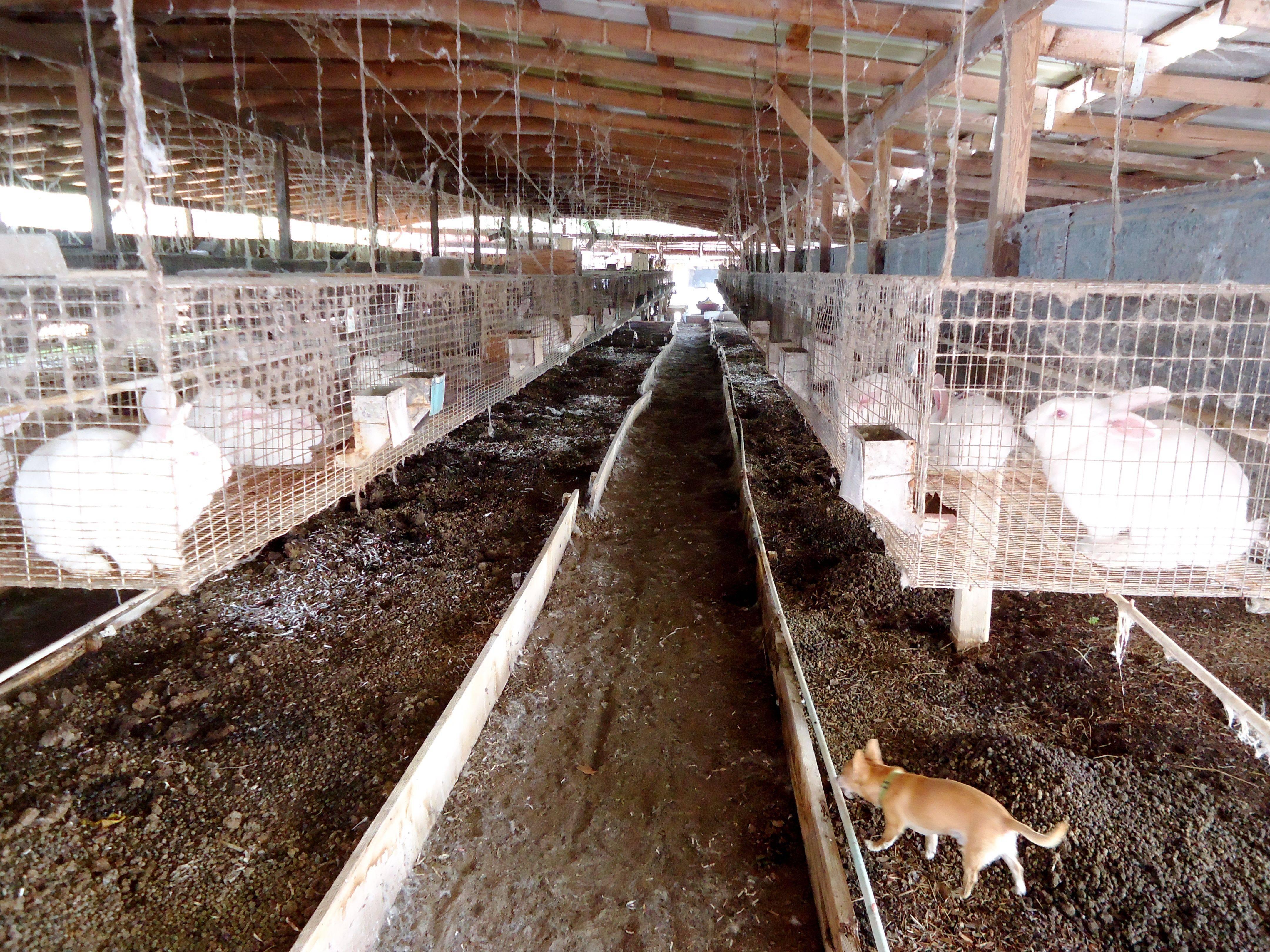 Мини-ферма для кроликов своими руками: чертежи, размеры, материалы