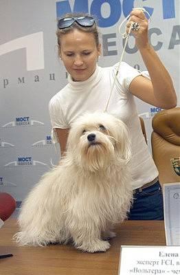 Одис: порода собак для домашнего разведения