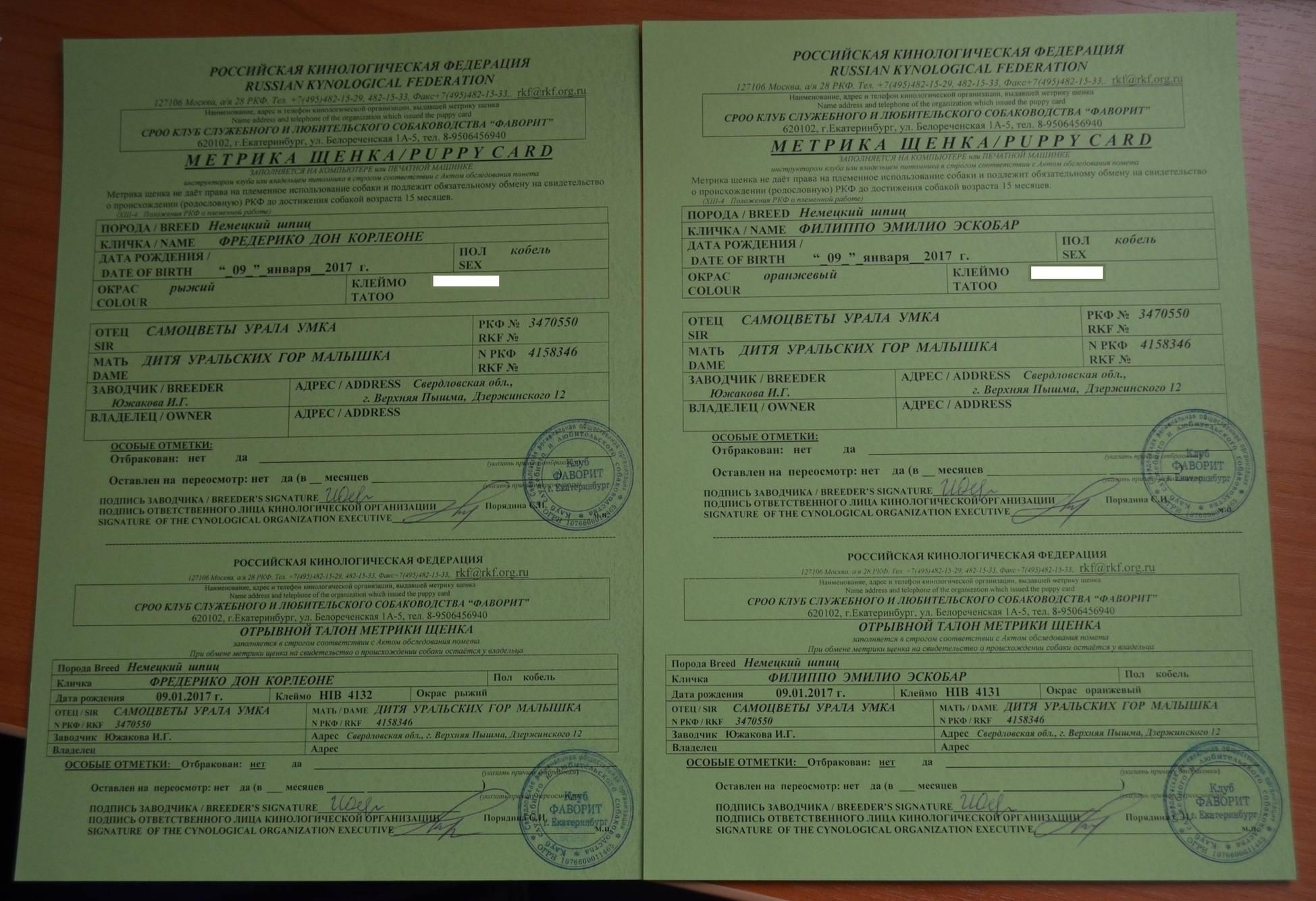 Ветеринарный паспорт на собаку: как сделать, где получить, для чего нужен собачий паспорт, какие еще бывают документы на собаку