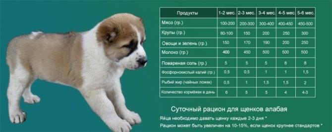 В какое время года лучше приобретать собаку?