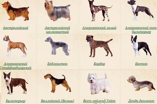 Сколько живут собаки - продолжительность жизни у собак