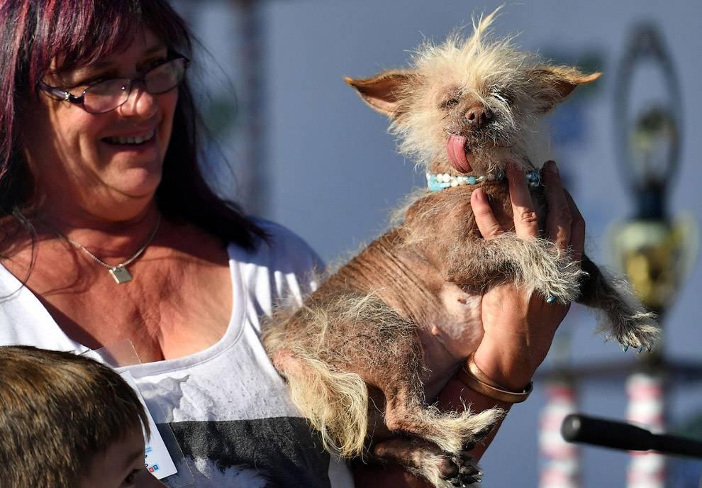Внешность обманчива – самые страшные собаки в мире: топ 10