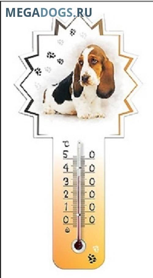 Как померить температуру собаке: способы и приборы для измерения
