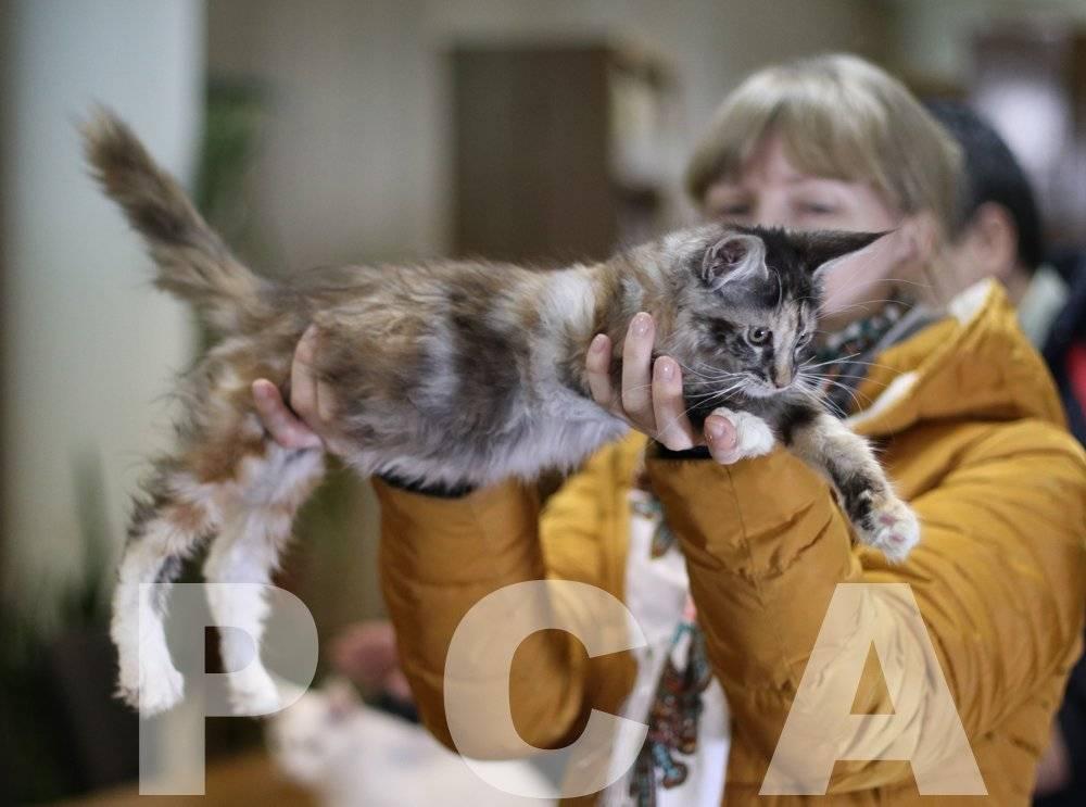 Закон о домашних животных в россии — что ждет владельцев кошек и собак в 2021 году