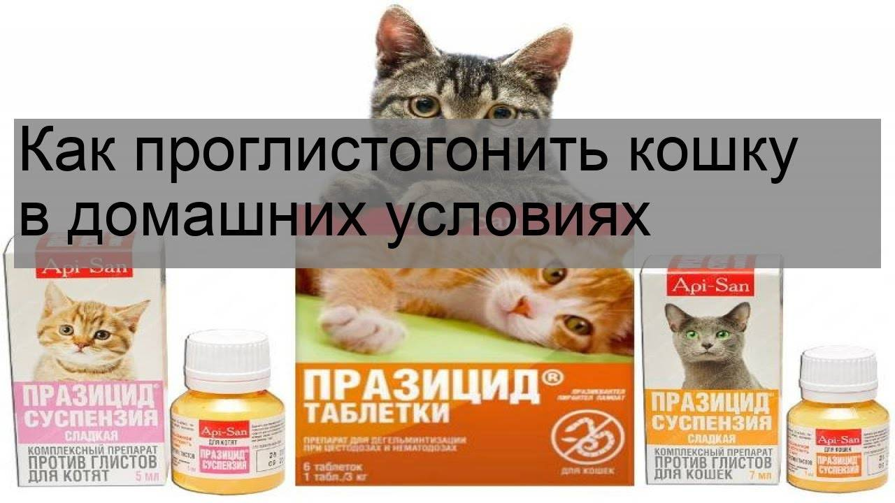 Хроническая почечная недостаточность у кошек - сибирский медицинский портал