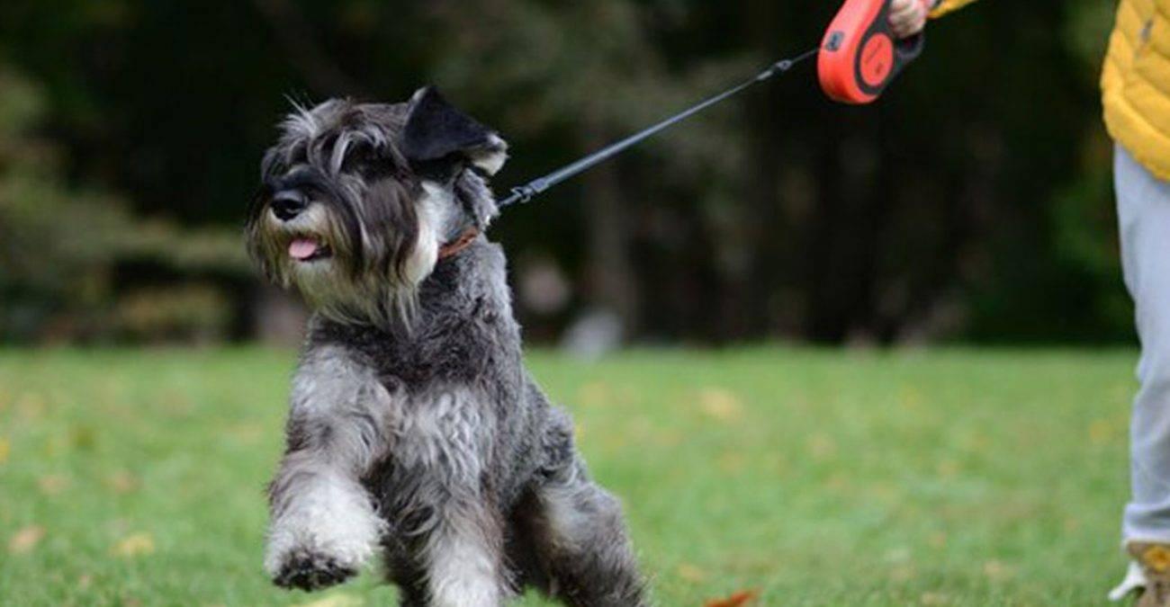 Какой поводок лучше для собаки - мнение эксперта