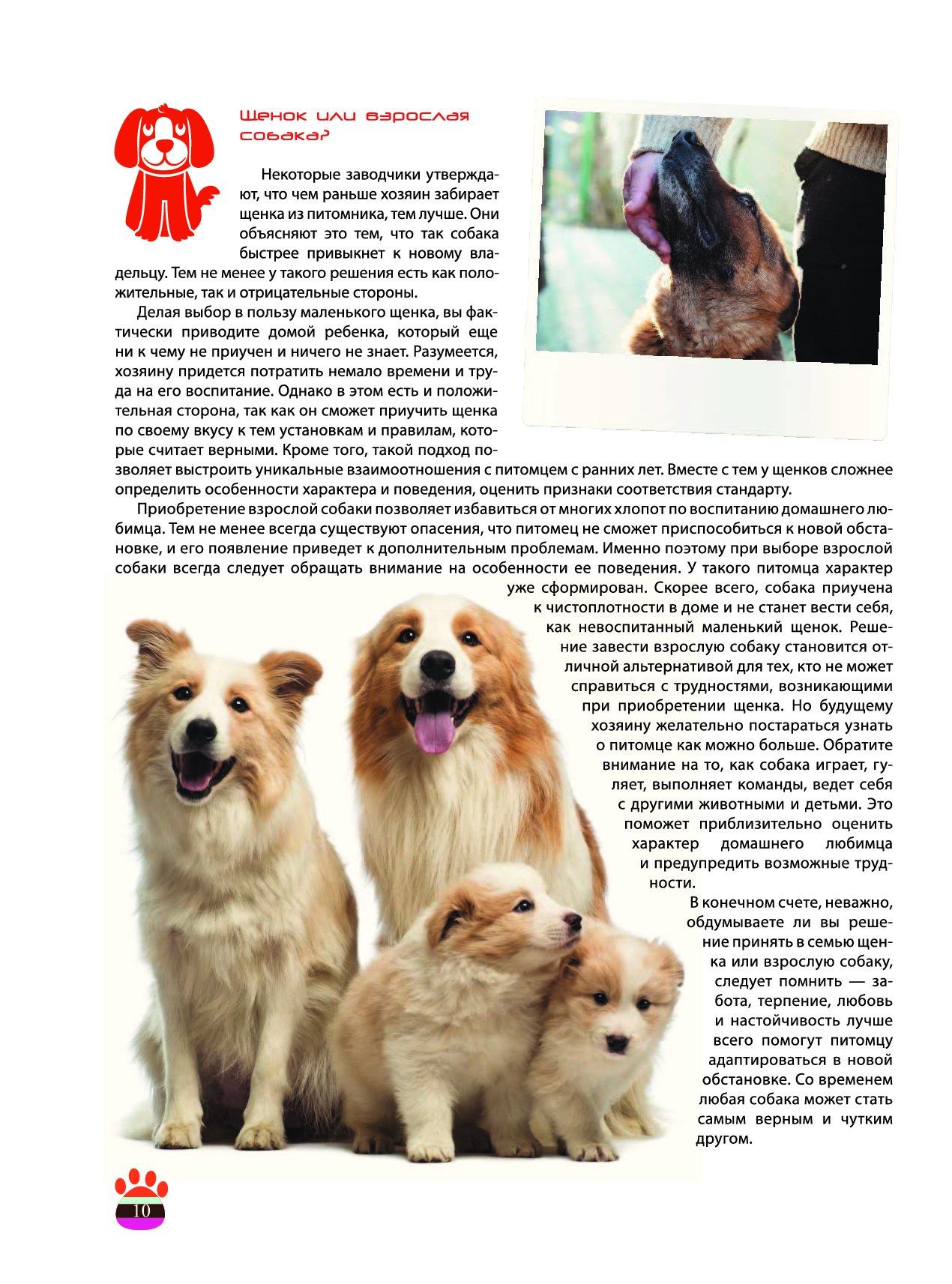 Как сделать родословную на собаку