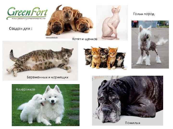 Кошки, не вызывающие аллергию | компетентно о здоровье на ilive