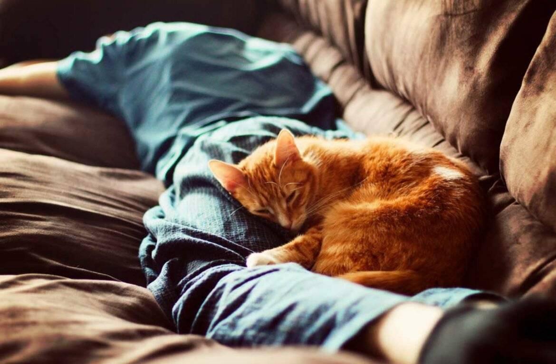 Почему кошки спят в ногах у хозяина