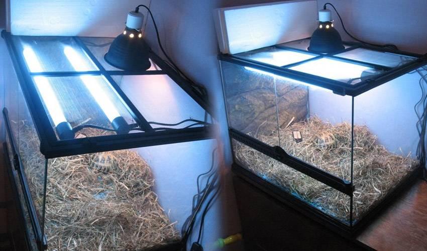 Последствия использования некачественных уф ламп для рептилий. уф лампа с aliexpress | turtlesland