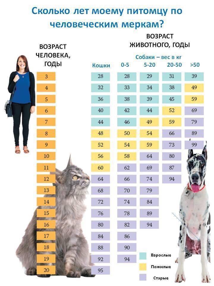 Сколько лет живут собаки: что влияет на продолжительность жизни и какие породы живут дольше всех