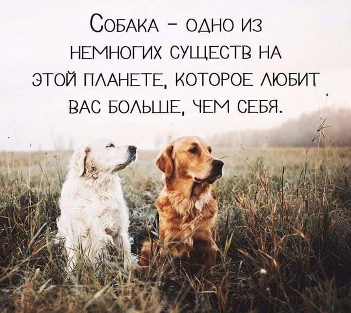 Почему собаку называют лучшим другом человека