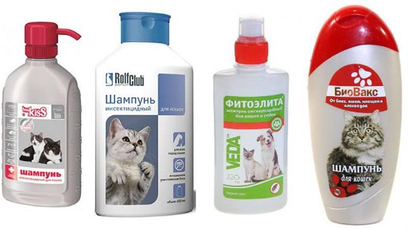Как мыть крысу в домашних условиях?